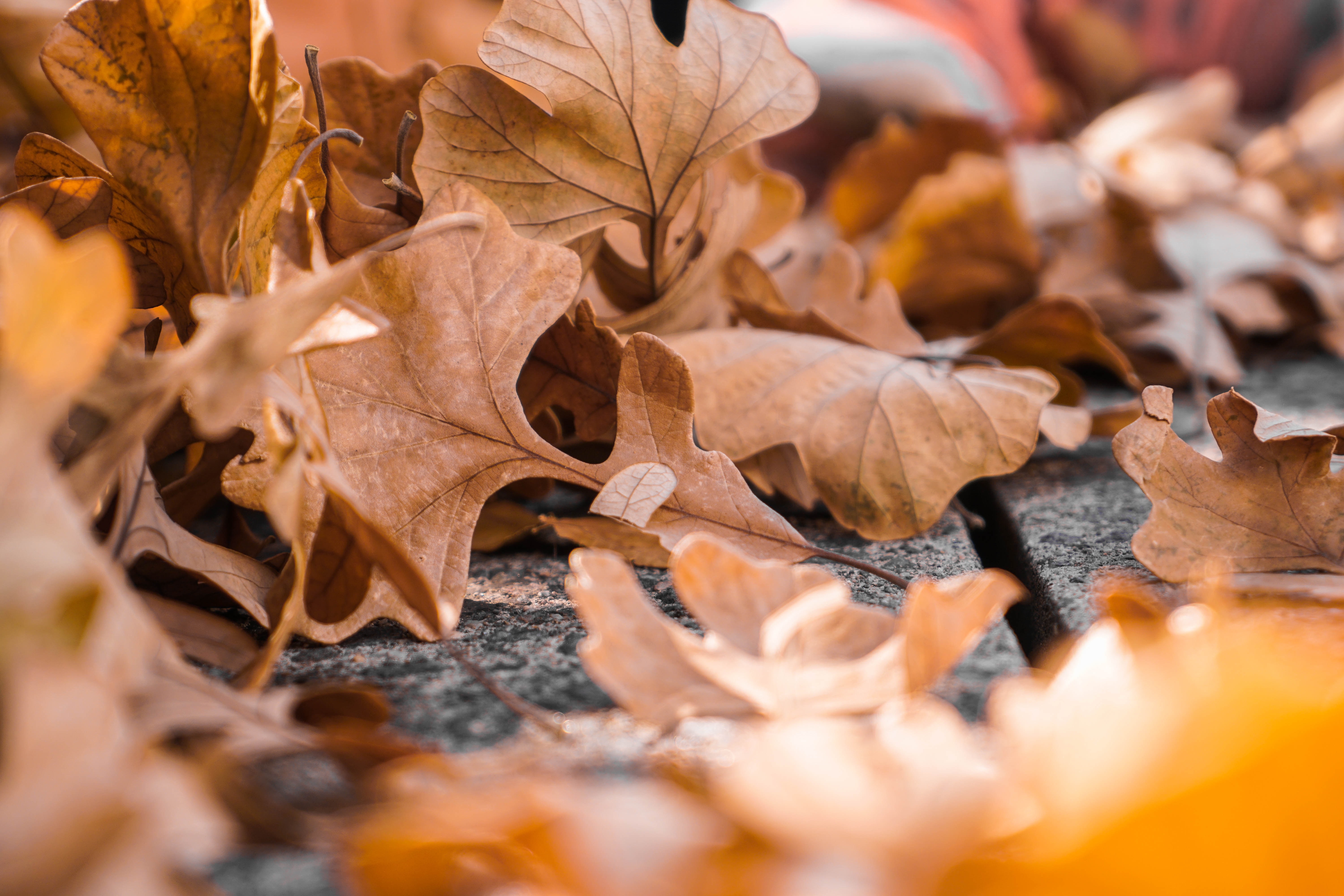 How Fall Leaves Can Interfere With Garage Door Sensors